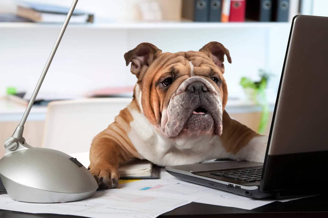Il cane in ufficio: pro e contro!