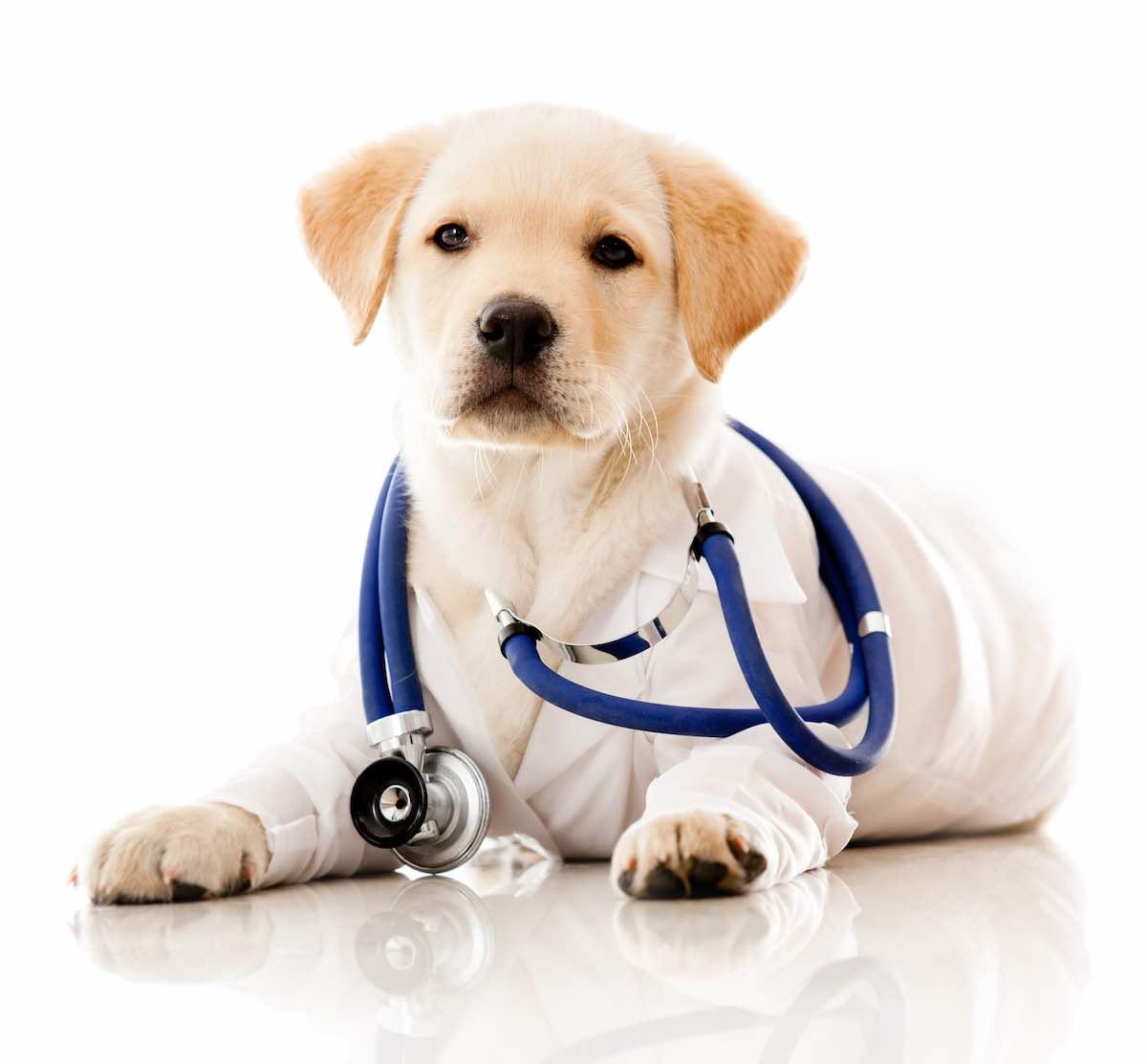 Il cane per salvare i pazienti diabetici