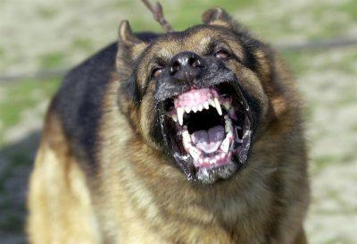 paura del cane che ringhia