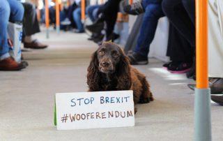 Wooferendum-01-320x202