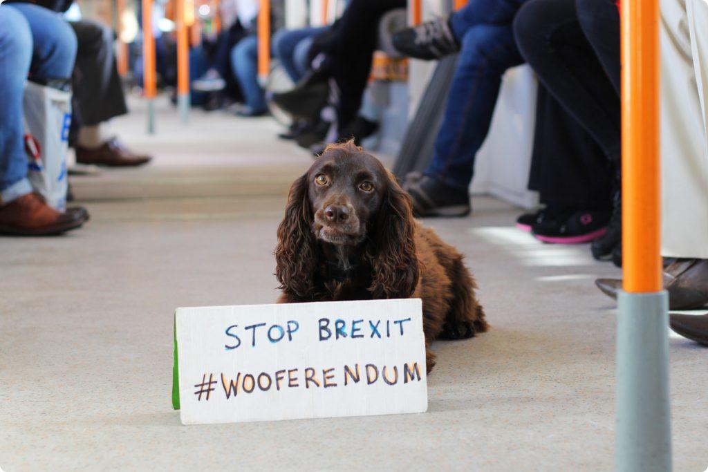 Londra: i cani sfilano contro la Brexit