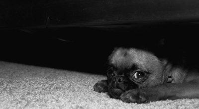 cane ha paura dei temporali