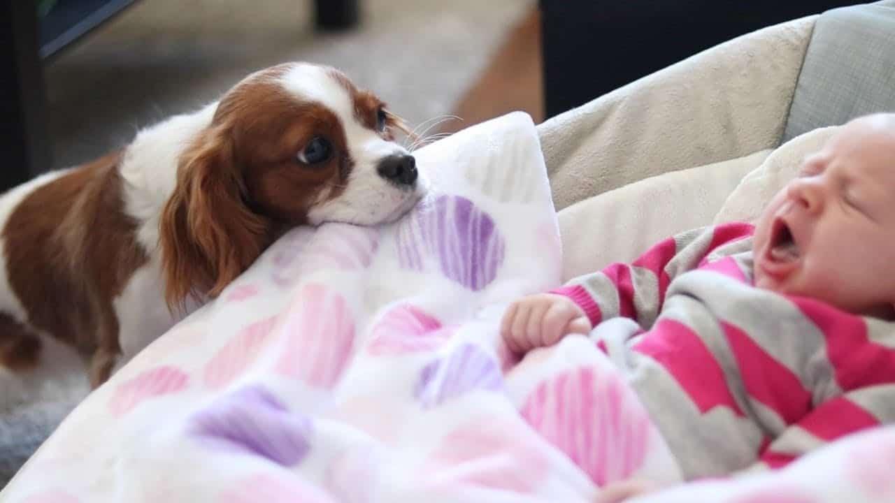 Il cane fa bene alla salute del bambino