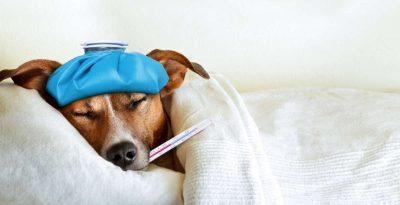 cane malato che aspetta la pillola