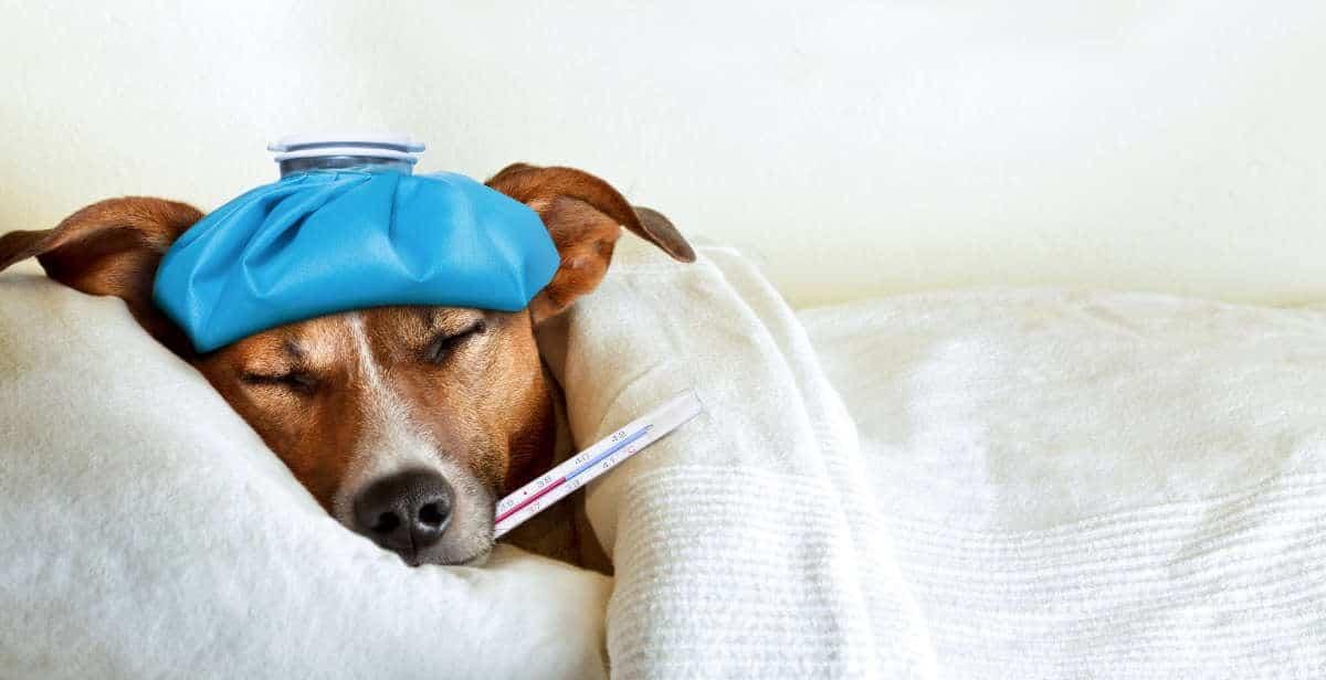 Come dare una pillola al cane?