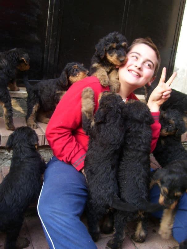 Cuccioli di Airedale Terrier dell'allevamento IULIUS