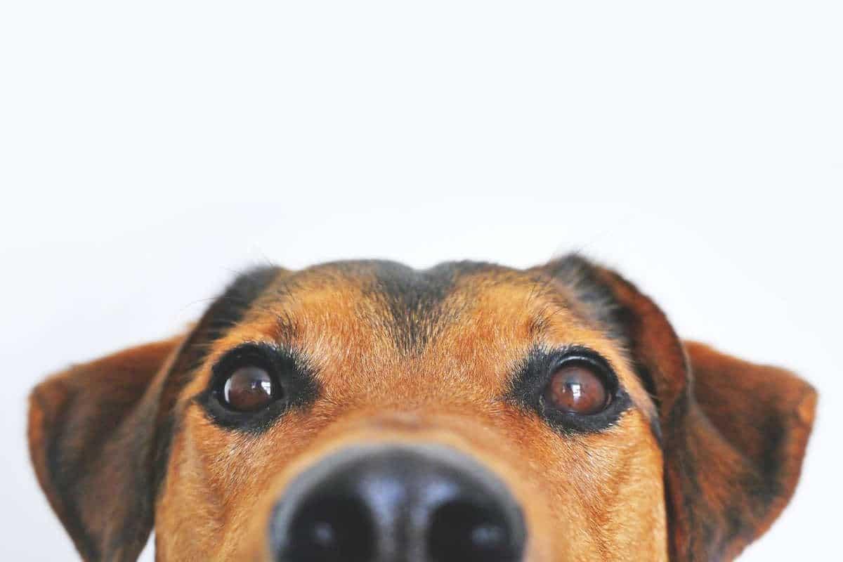 Ti sei mai chiesto come vedono i cani?