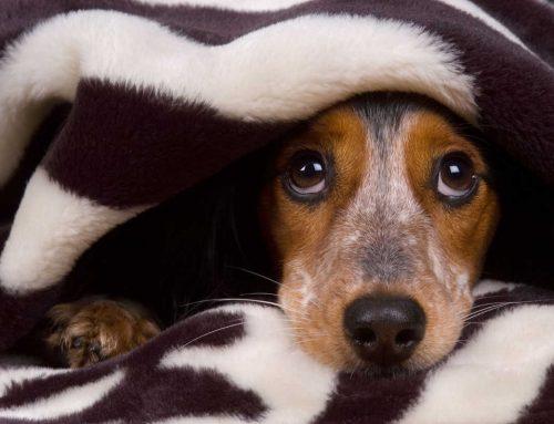 Come avvicinarsi ad un cane spaventato