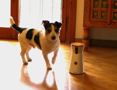 Furbo: un regalo per il vostro cane