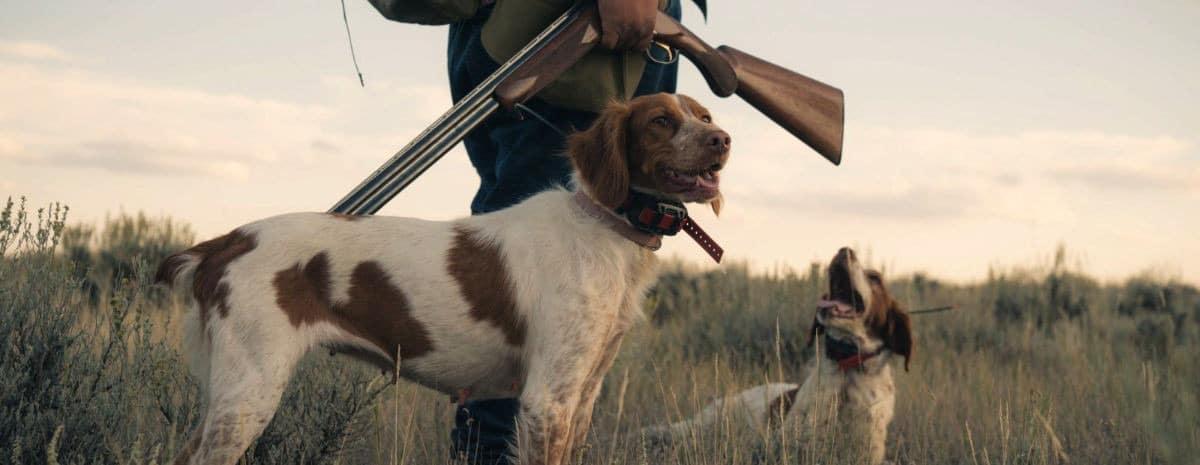 Cane da caccia per compagnia?