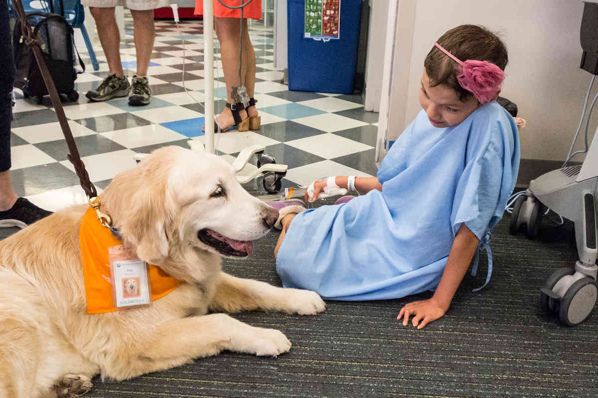 Lazio: cani e gatti possono entrare in ospedale