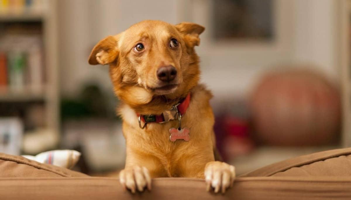 Capodanno: come aiutare i cani con i botti