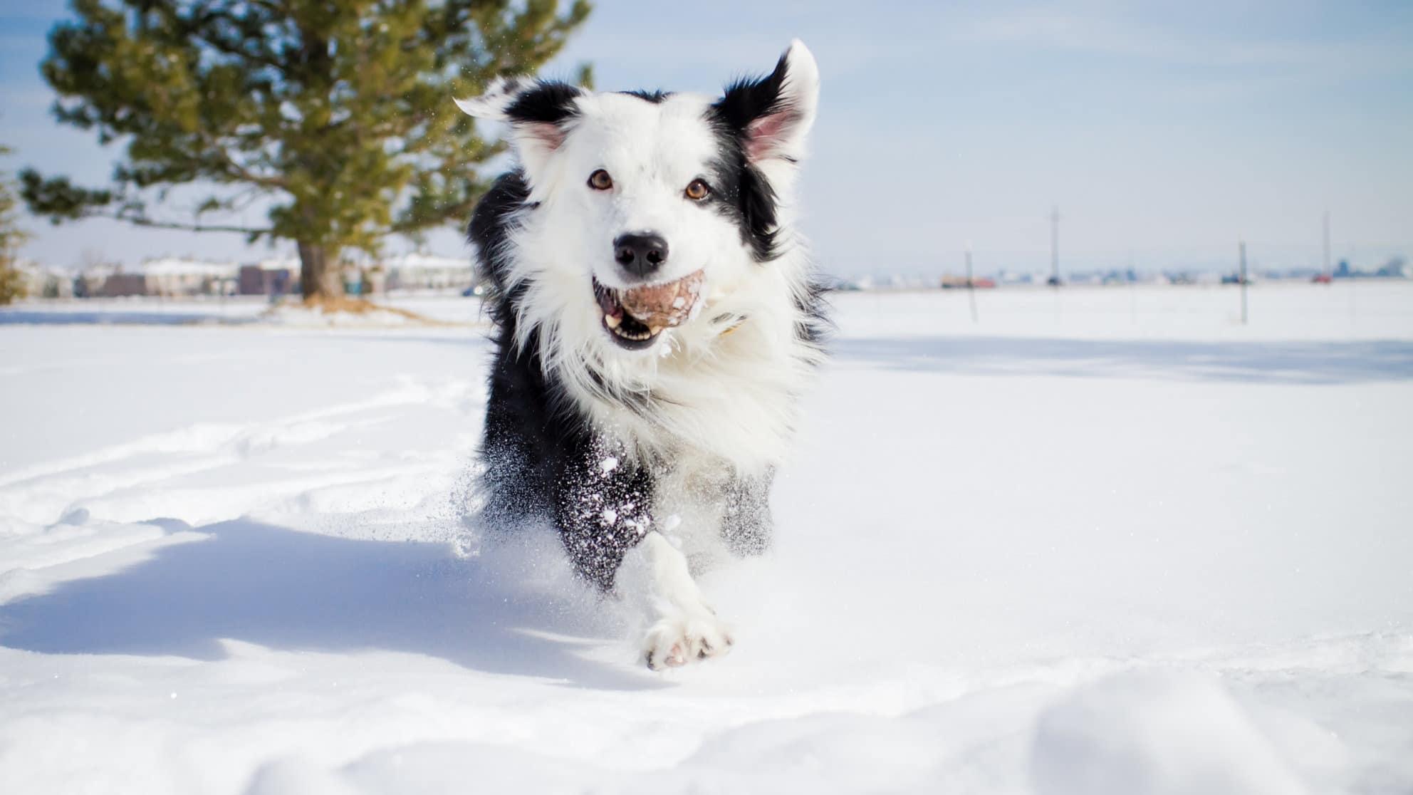 Il cane e la neve: cosa devi sapere!