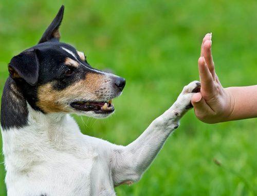 Come capire il comportamento del cane