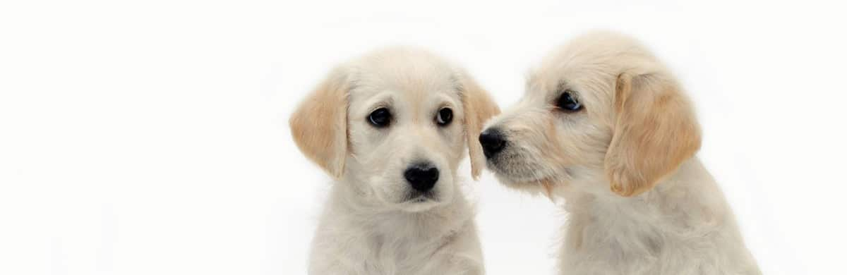 Traffico di cuccioli: una piaga sempre presente