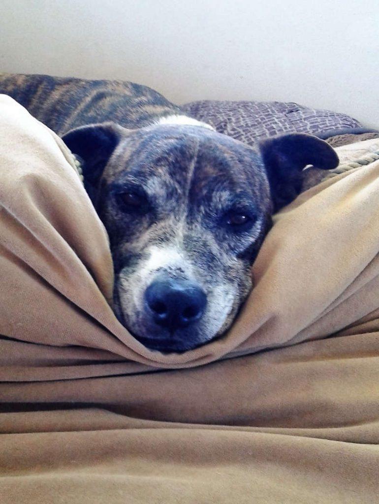 anziano su cuscino