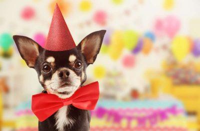 cane-che-festeggia-400x262