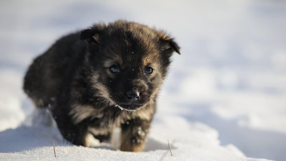 Arriva il freddo: scopri come salvaguardare il tuo cane