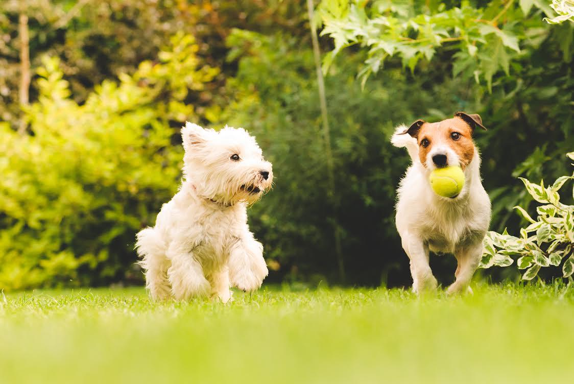 Cani senza guinzaglio: parte la sperimentazione