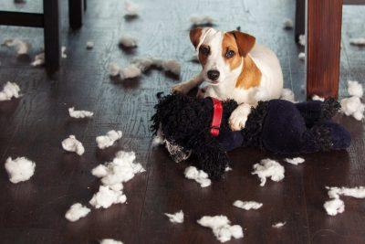 Educare il cane, servizi per cani: veterinario, servizi per cani: allevamento, servizi per cani: canile, servizi per cani: centro cinofilo, servizi per cani: spiagge, interviste sulle razze, notizie sul mondo cinofilo, capire il comportamento del cane, prima di prendere un cane