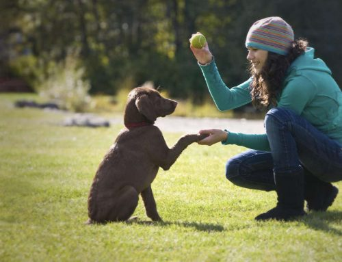 """Io e il mio cane offre gratuitamente il servizio """"domanda all'esperto"""""""