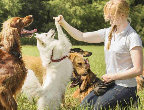 Hai problemi ad educare il tuo cane? chiedi all'esperto!