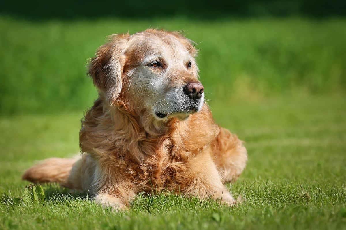 Ospizi per cani: in Giappone nascono gli ospizi per cani
