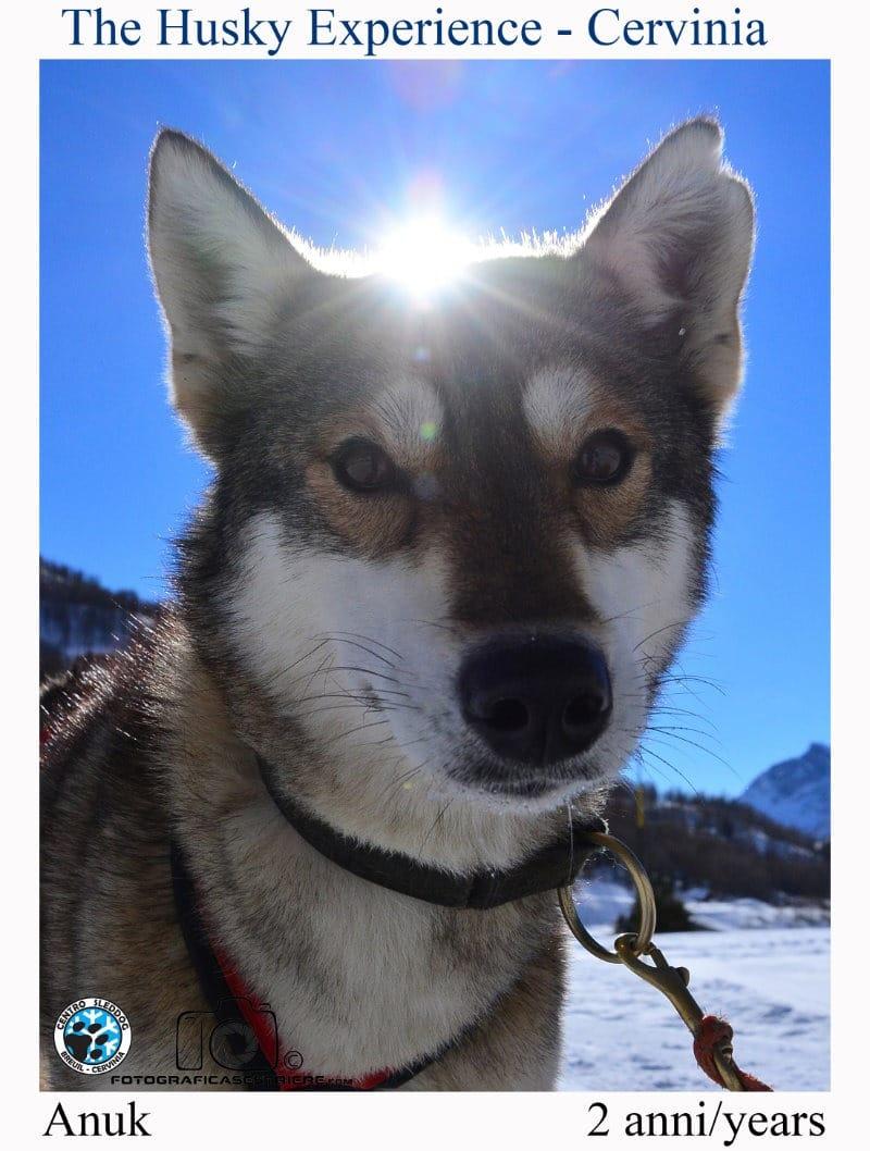 anuk - The husky experience
