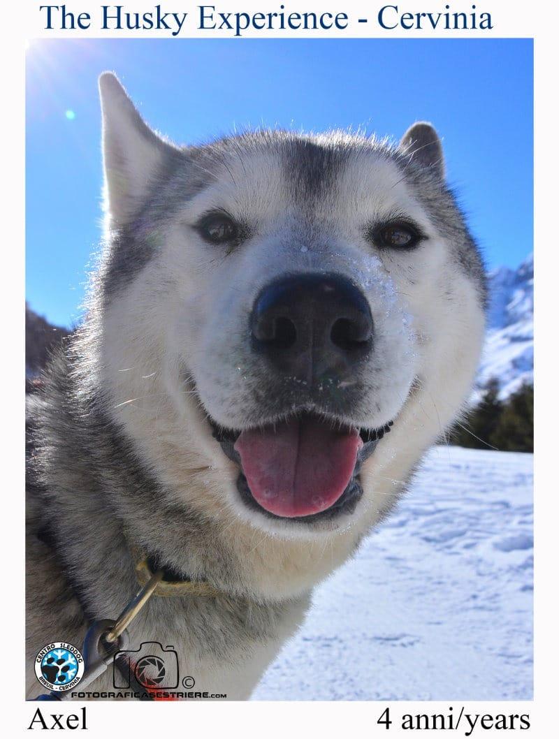 axel - The husky experience