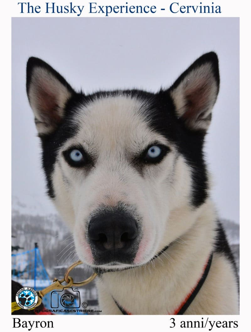 bayron - The husky experience