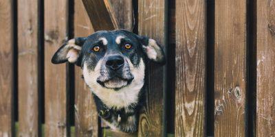 cane-attraverso-un-cancello-400x200