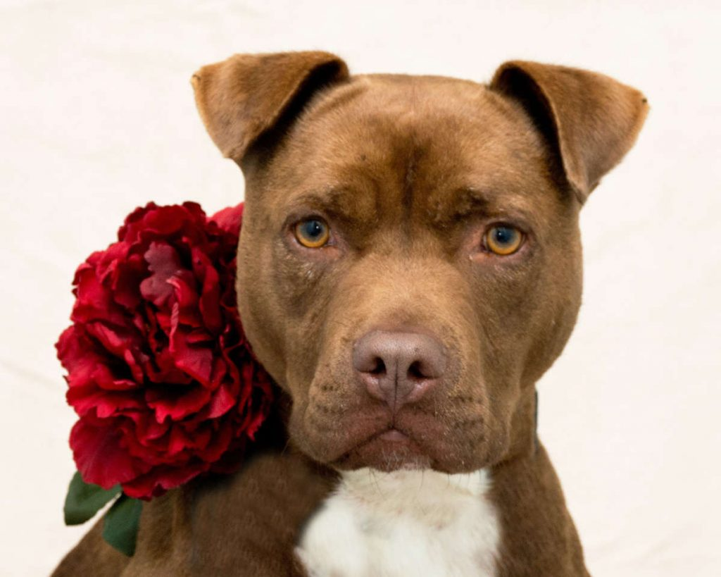 cane con fiore