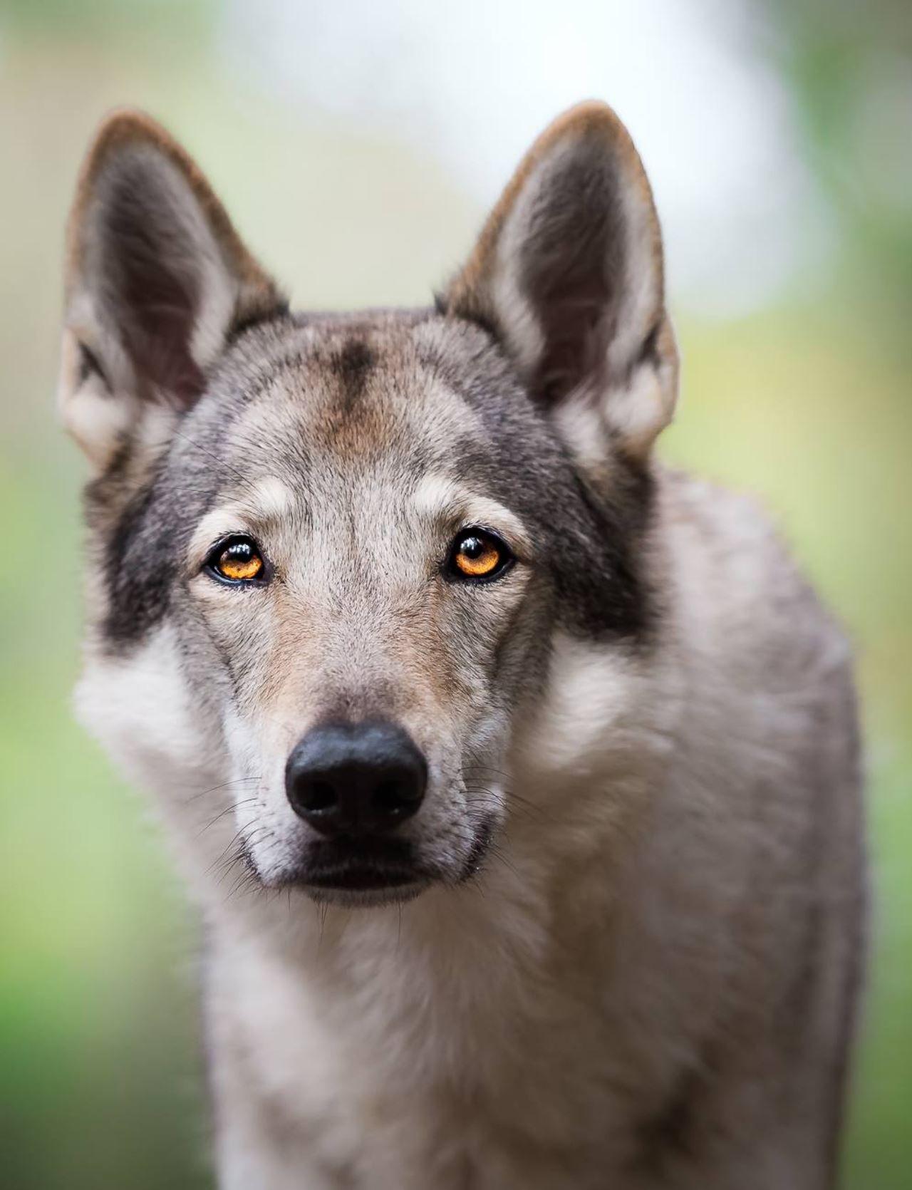 Uccide due cani a fucilate: denunciato!