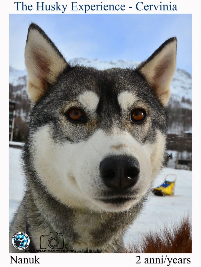 nanuk - The husky experience