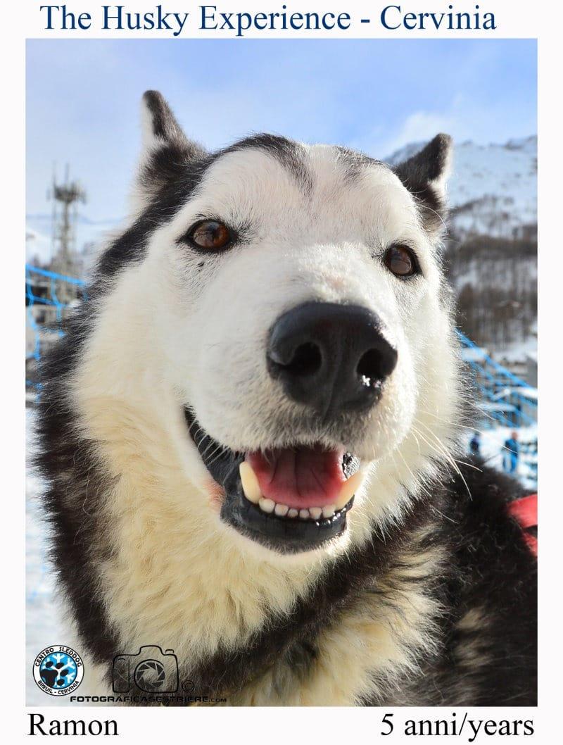 ramon - The husky experience
