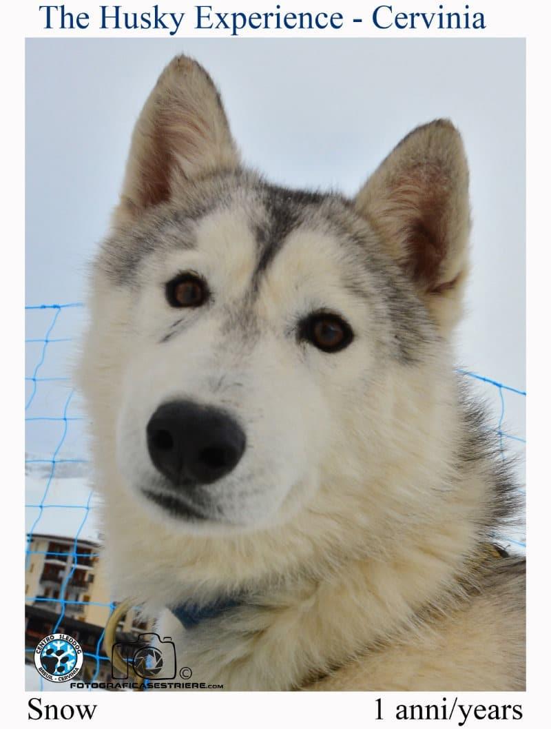 snow - The husky experience