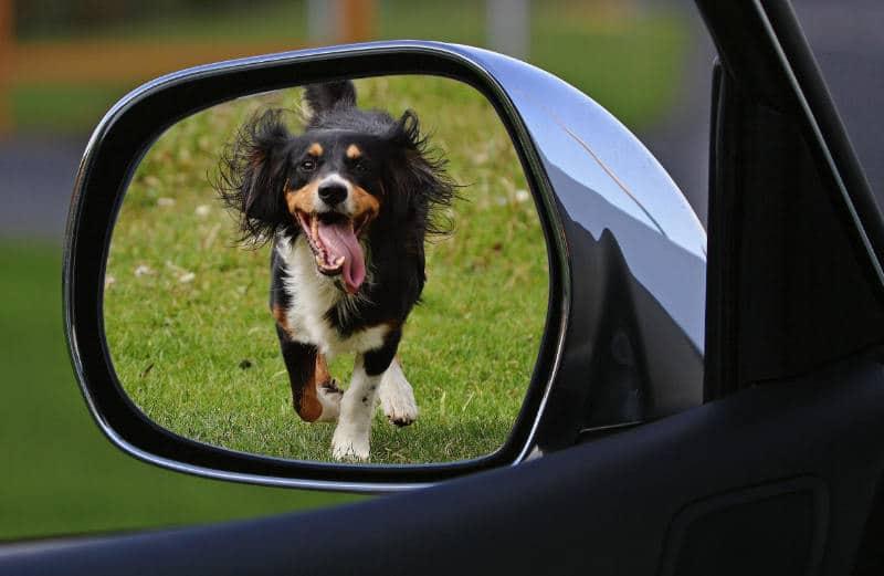 Perchè il mio cane insegue le auto?