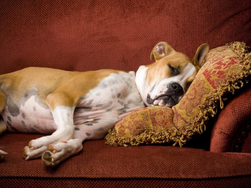 Come abituare il cane a restare solo a casa