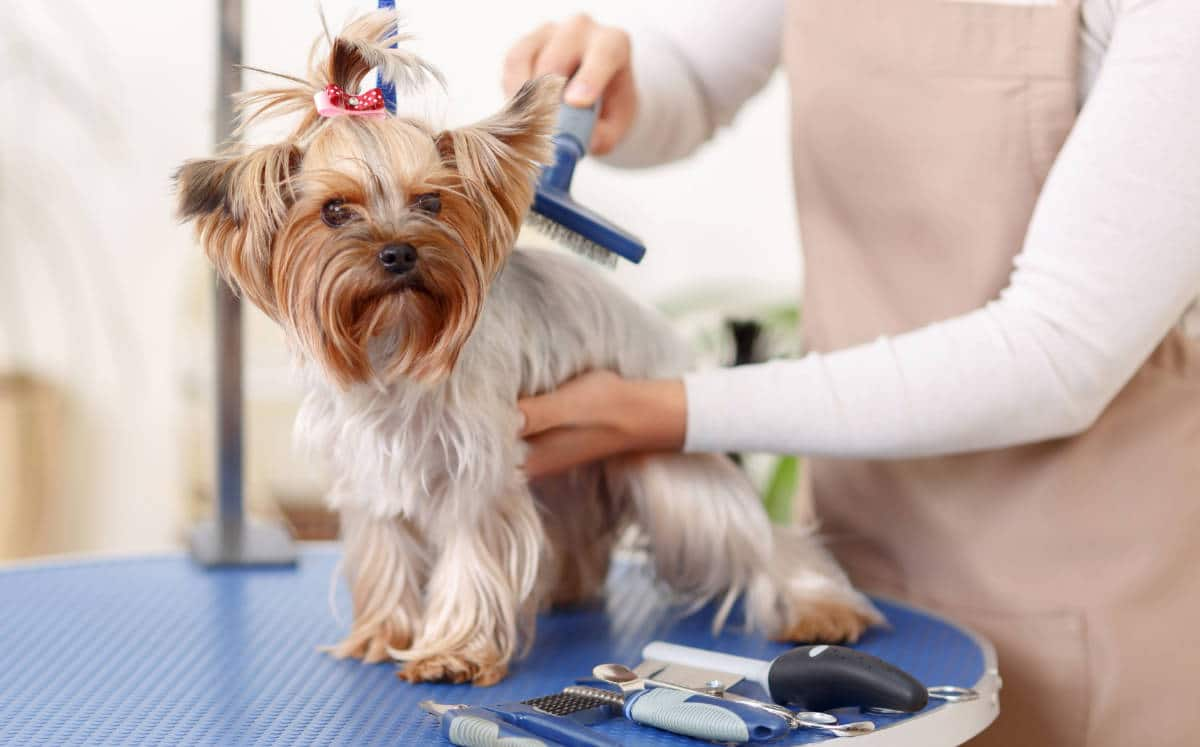 Servizi per cani: toelettatori