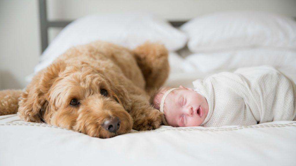 cane a letto con bambina