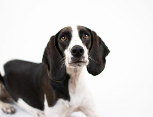 Come educare un cane sordo?