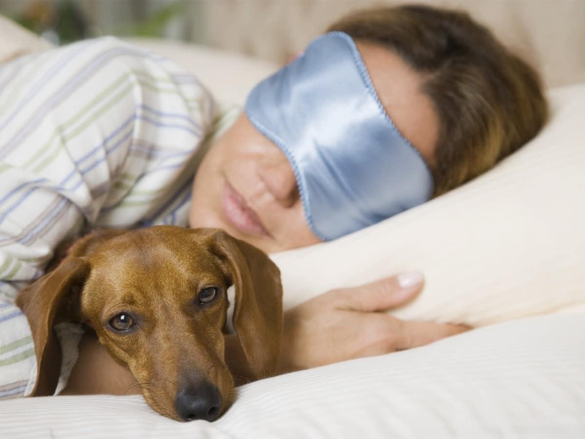 Perchè il mio cane non dorme di notte?