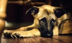 I cani soffrono il lutto?