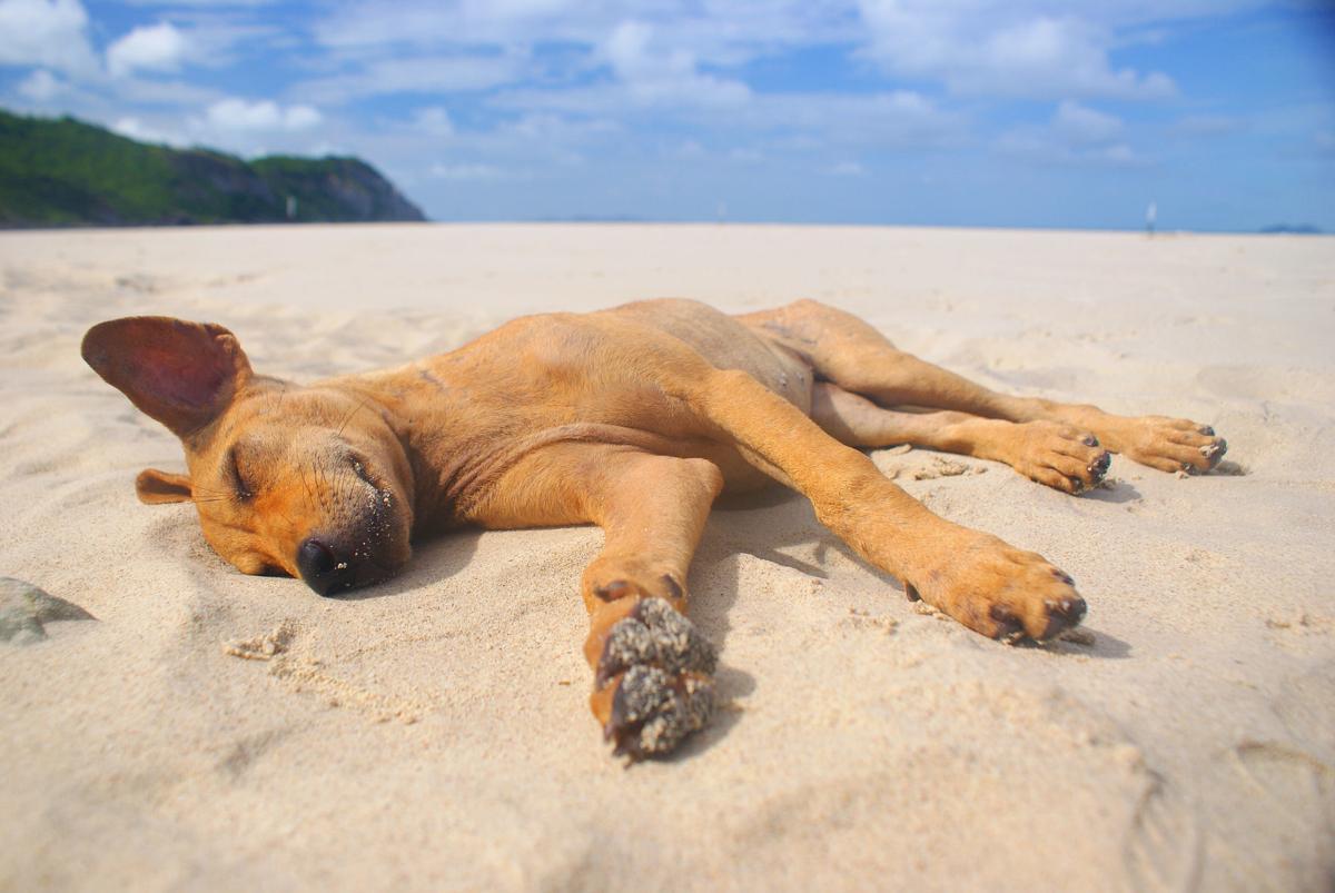 Perchè il mio cane si rilassa al sole?