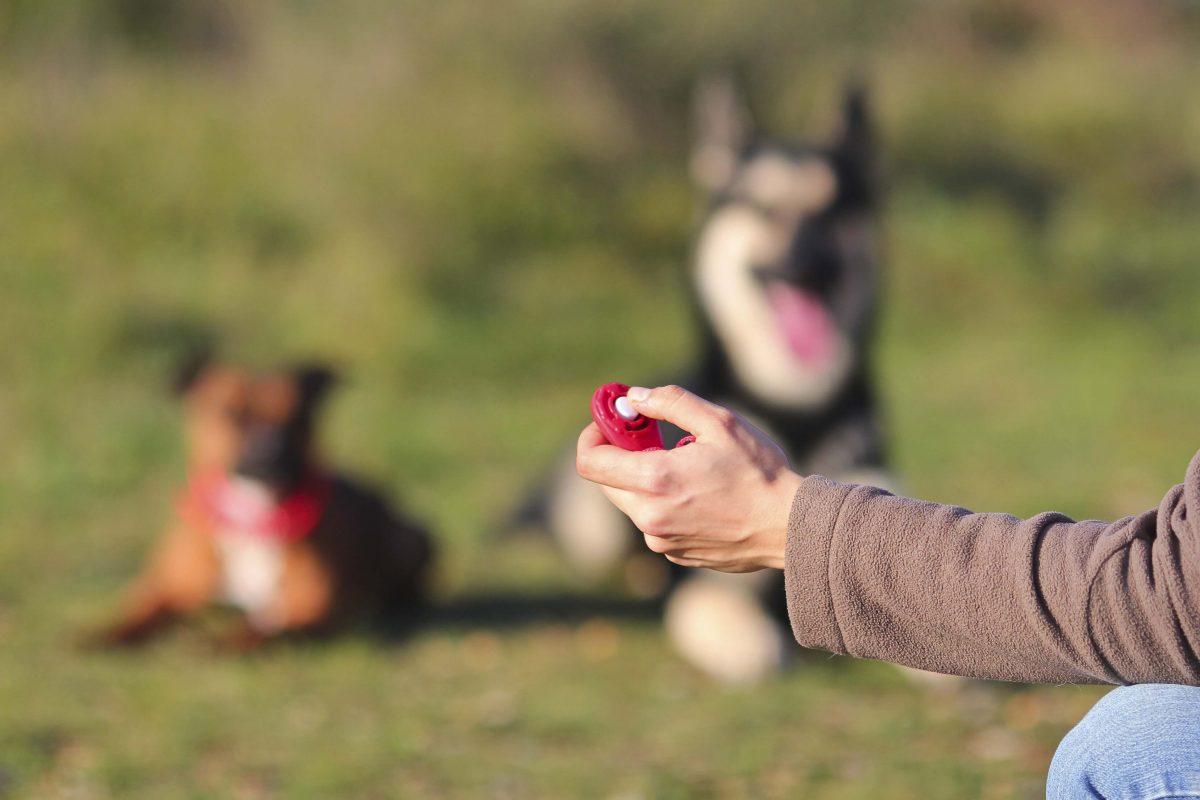 Educare il cane: il clicker