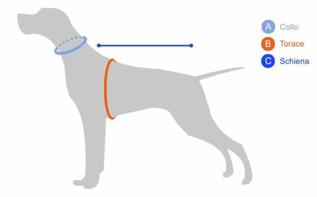 misurare-il-cane-1