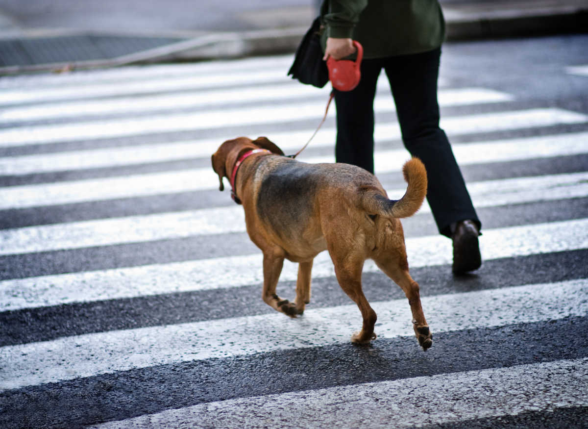 Perchè i cani scavano dopo aver fatto i bisogni?