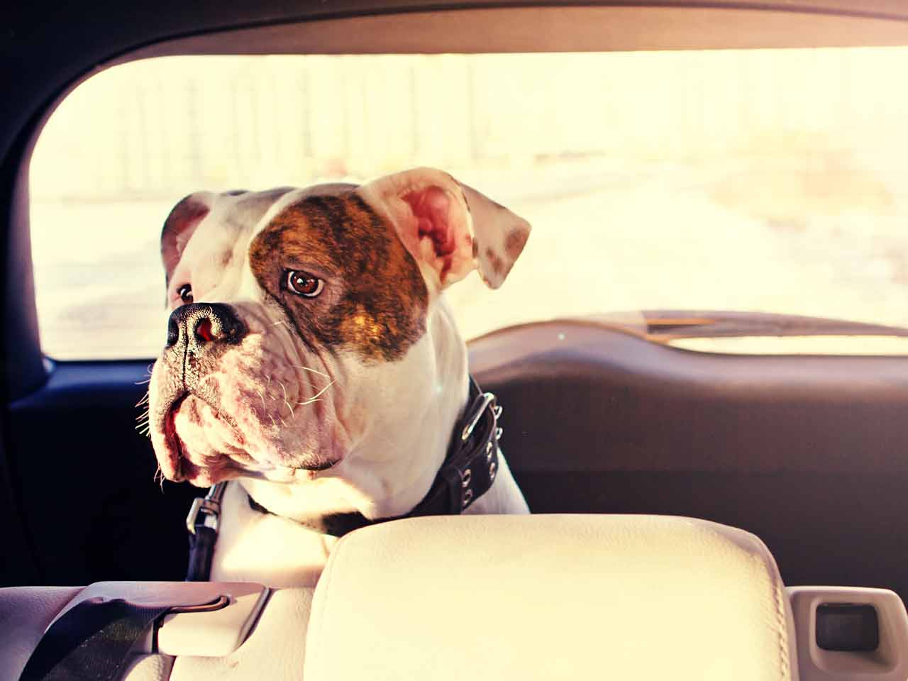 Cane in auto: cosa prevede il codice della strada?