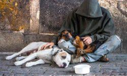 Milano: assistenza gratuita per i cani dei senzatetto