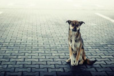 cane-abbandonato-strada-400x267
